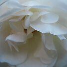 Shy Bride by Tama Blough