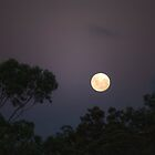 Moon Light by Priceless
