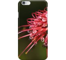 Grevilleas In the Daylight iPhone Case/Skin