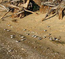 Atsena Otie Key near Cedar Key Florida by rhianana