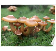 Toadstool Cluster  Poster