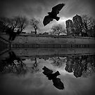 Pigeon and Notre-Dame by Laurent Hunziker