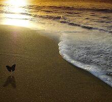 Butterfly on the sea by Laurent Hunziker