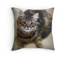 Pretty New Kitty Throw Pillow
