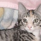 Tigress by Persephoni