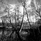 Lone Tree by imagesmatter