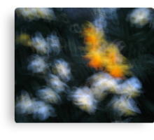 Impressionist white and yellow daffodils Canvas Print