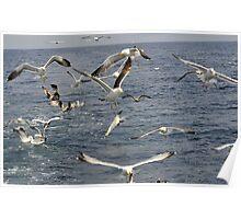 seabird seascape Poster