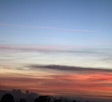 Early Morning Flight by Jenelle  Irvine