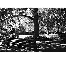 Botanical Photographic Print