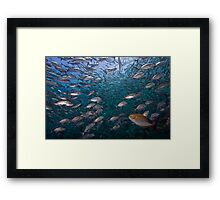 Tulamben's Top Shelf Framed Print