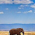 Elephant Walking - Ngorongoro Crater Conservation Area - Tanzania by Scott Ward