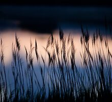 Reeds against a lake at sunset by Katariina Jarvinen