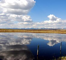 Reflections  by Judy Grant