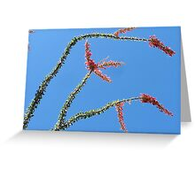 Ocotillo in Bloom Greeting Card