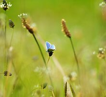 meadow with butterfly by lukasdf