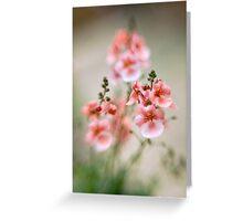 Soft peach Greeting Card