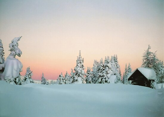 Snowy trees in the Purcells by Istvan Hernadi