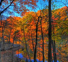 Through The Woods by Ron Waldrop