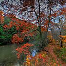 Autumn River Bank by Ron Waldrop