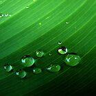 Rain Drops on the leaf by Ana  Marija