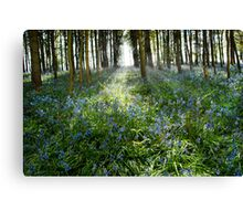 Bluebell Glimmer Canvas Print