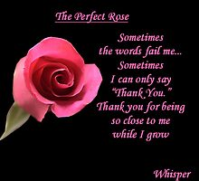 The Perfect Rose by wildflower