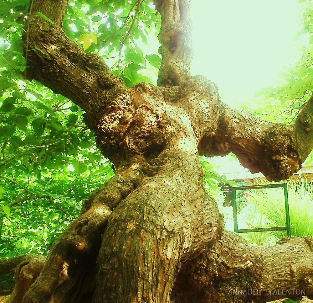 body of a tree or woman by ANNABEL   S. ALENTON