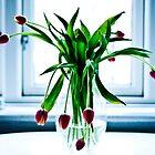 Beauty of Tulips by juliegrath