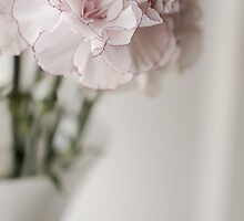 Carnations by juliegrath