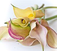 Calla Lilies  by juliegrath