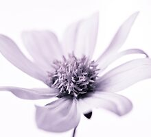 Purple Rain by juliegrath