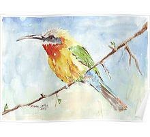 Whitefronted Bee-eater (Merops bullockoides) Poster