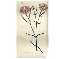 The Botanical magazine, or, Flower garden displayed by William Curtis V9 V10 1795 1796 0020 Dianthus Superbus Superb Pink Poster