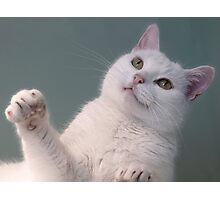 Talk to the Paw!!  Photographic Print