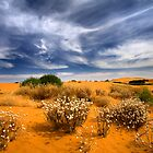 Living Desert 1 - Perry Dunes by Hans Kawitzki