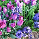 Tulips and Hyacinths by GardenJoy