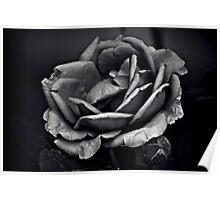 Mysterious Rose Black/White Poster
