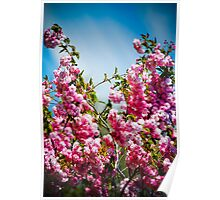English Cherry Blossom Branches Poster
