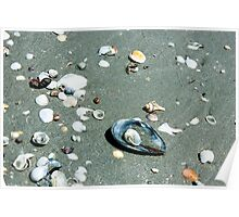 Seashells in the Sand Poster