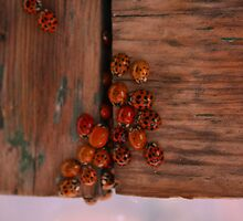 Ladybugs by MarkieR