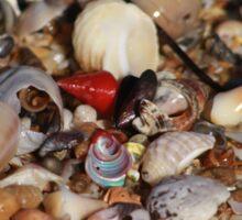 A Shell of a Beach Sticker