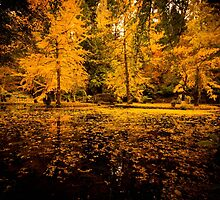 Garden in gold by age-photography