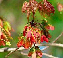 New Leaves Budding by vigor