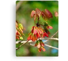 New Leaves Budding Canvas Print