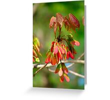 New Leaves Budding Greeting Card