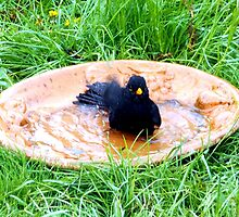 Black bathing in the garden by Heidi Mooney-Hill