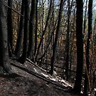 Charred Trees - Lake Superior - outside Pays Plat Ontario by loralea