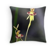 Fringed hair orchid. Leporella fimbriata Throw Pillow