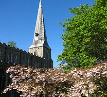 ' Inspired Blossom ' Hadleigh, Suffolk by wiggyofipswich
